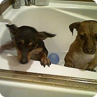 Adopt A Pet :: Eddy & Sparkles - Kirkland, WA