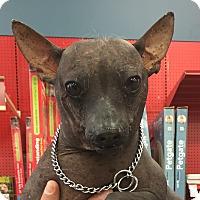 Adopt A Pet :: Elizabeth - Tucson, AZ