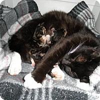 Adopt A Pet :: Po - Watkinsville, GA