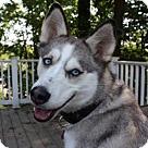 Adopt A Pet :: Zaira Adoption Pending Congrats Green Family!