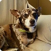 Adopt A Pet :: Walter - Hesperia, CA