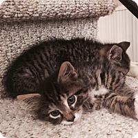 Adopt A Pet :: Mandy - Berkeley Hts, NJ