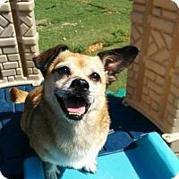Adopt A Pet :: Bernice - Alpharetta, GA