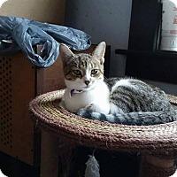 Adopt A Pet :: CVS - Putnam, CT