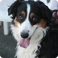 Adopt A Pet :: Roo - Canoga Park, CA