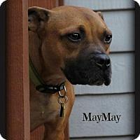 Adopt A Pet :: MayMay - Doylestown, PA