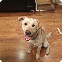 Adopt A Pet :: Biscuit II - Dallas, TX