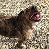 Plott Hound Mix Dog for adoption in Poland, Indiana - Arrow