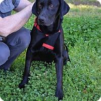 Adopt A Pet :: Roy - Cumming, GA