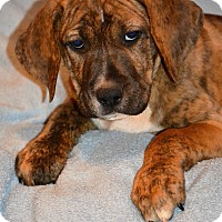 Adopt A Pet :: Morgan - Albemarle, NC