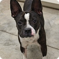 Adopt A Pet :: Emmett - Weatherford, TX