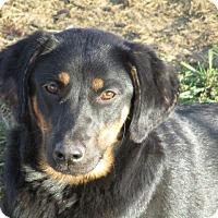 Adopt A Pet :: Jade - Liberty Center, OH