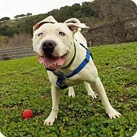 Adopt A Pet :: Tonka - Los Olivos, CA