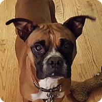 Adopt A Pet :: Jake 2 - Woodinville, WA