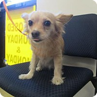 Adopt A Pet :: Madelyn - Irving, TX