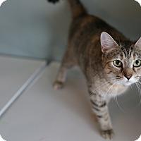 Adopt A Pet :: Mia - San Antonio, TX