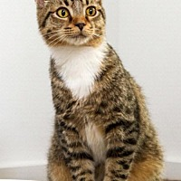 Adopt A Pet :: Jackie - Knoxville, TN