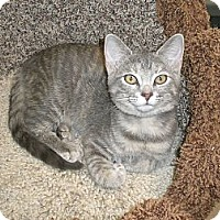 Adopt A Pet :: Caia - Byron Center, MI