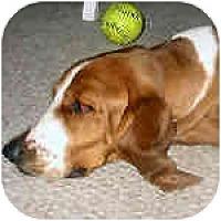 Adopt A Pet :: Dobby - Phoenix, AZ