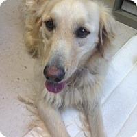 Adopt A Pet :: Francis - Foster, RI
