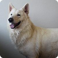 Adopt A Pet :: Cosco - Baltimore, MD