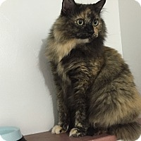 Adopt A Pet :: Sophie - Colorado Springs, CO