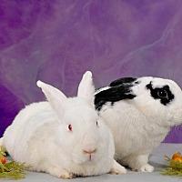 Adopt A Pet :: Jersey - Marietta, GA