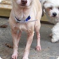 Adopt A Pet :: Danny - Greensboro, GA