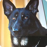 Adopt A Pet :: MATEO VON MARCO - Los Angeles, CA