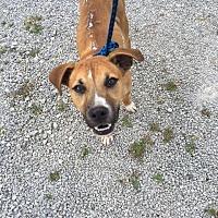 Adopt A Pet :: Chance - Morehead, KY