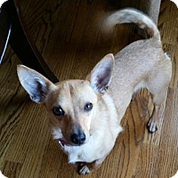 Adopt A Pet :: Cy - Irmo, SC