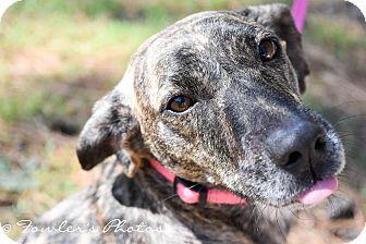 Plott Hound/Terrier (Unknown Type, Medium) Mix Dog for adoption in Texarkana, Texas - Anna