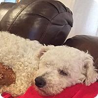 Adopt A Pet :: Chaz - Homer, NY