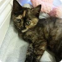 Adopt A Pet :: Amelia - Duluth, GA