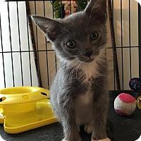 Adopt A Pet :: London - Orlando, FL