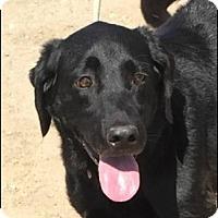 Adopt A Pet :: Charlotte - Sunnyvale, CA