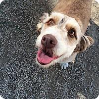 Adopt A Pet :: Missy - Meridian, ID