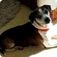Adopt A Pet :: Ruthie - Alvarado, TX