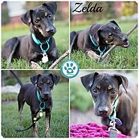 Adopt A Pet :: zelda - Kimberton, PA