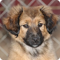 Adopt A Pet :: Yogi ~adopted! - Glastonbury, CT