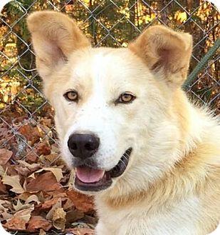 Husky Mix Dog for adoption in Harrisonburg, Virginia - Monkey