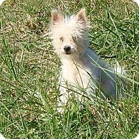 Adopt A Pet :: Wilson - Cameron, MO