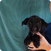 Adopt A Pet :: Napa - Oviedo, FL