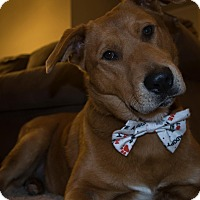 Adopt A Pet :: Dash - Springfield, MO