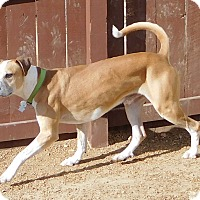 Adopt A Pet :: Kobi - House Springs, MO