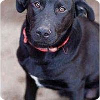 Adopt A Pet :: Olaf - Portland, OR