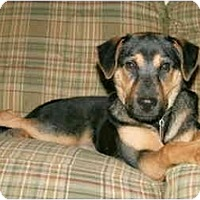 Adopt A Pet :: Frannie-AVAILABLE! - kennebunkport, ME