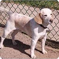Adopt A Pet :: Coltrane - Phoenix, AZ