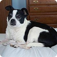 Adopt A Pet :: Charlie - Hilliard, OH