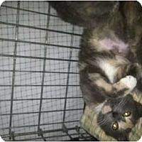 Adopt A Pet :: ERIN - Clay, NY